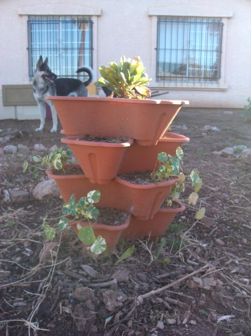 Plant Tower and a Cute Dog.